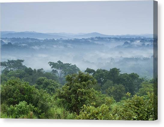 Tropical Rainforests Canvas Print - Tropical Rainforest Kibale Np Western by Sebastian Kennerknecht