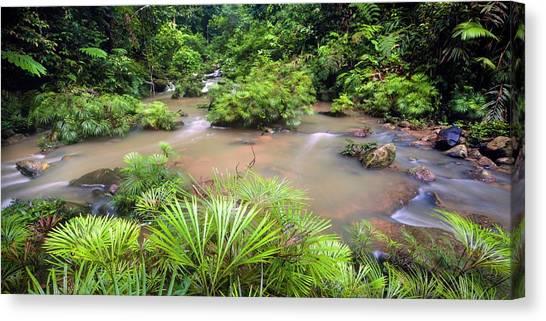 Tropical Rainforests Canvas Print - Tropical River Bank by Alex Hyde