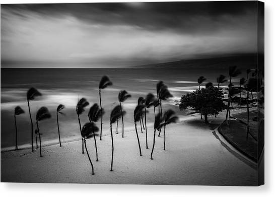 Weathered Canvas Print - Tropical Storm by Rob Darby