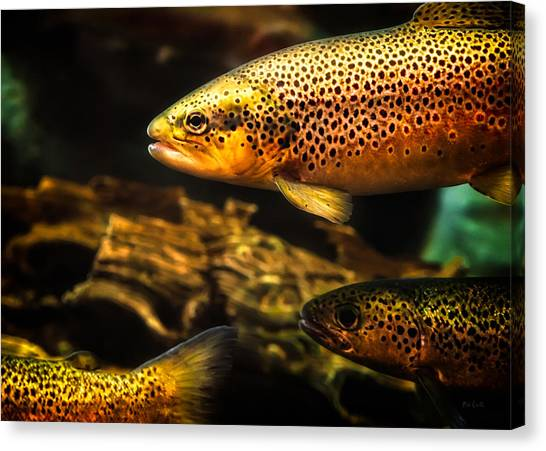 Underwater Caves Canvas Print - Trout Swiming In A River by Bob Orsillo