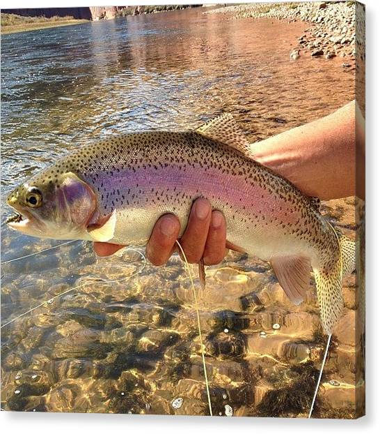 Trout Canvas Print - #trout #troutfishing #wildlife #fishing by Mark Jackson