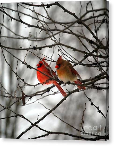 Cardinals Canvas Print - True Love Cardinal by Peggy Franz