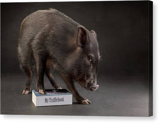 Pigs Canvas Print - Truffle by Nuelle Flipse