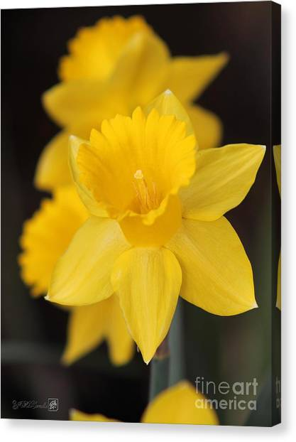 Trumpet Daffodil Named Exception Canvas Print