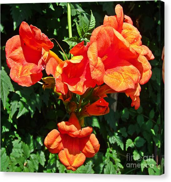 Trumpet Flower Orange Quartet Canvas Print