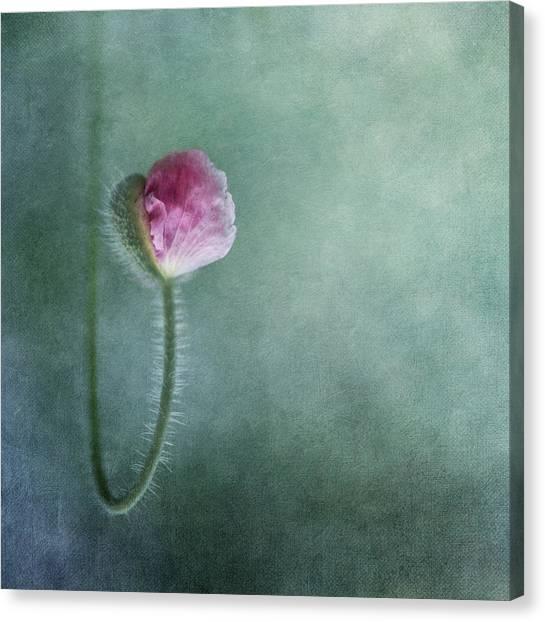 Romantic Flower Canvas Print - Trust by Priska Wettstein