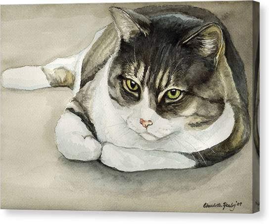 Tubby Canvas Print by Charlotte Yealey