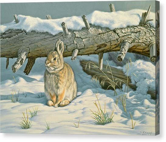Rabbits Canvas Print - Tucked In by Paul Krapf