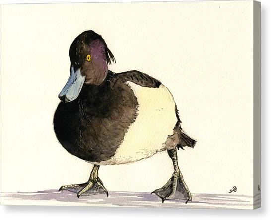 Ducks Canvas Print - Tufted Duck by Juan  Bosco