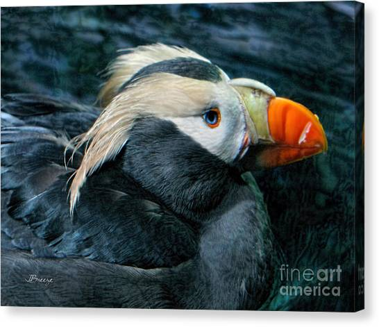 Tufted Puffin Profile Canvas Print