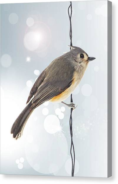 Titmice Canvas Print - Tufted Titmouse Twinkle by Bill Tiepelman