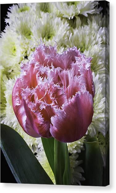 Pom-pom Canvas Print - Tulip And Pom Poms by Garry Gay
