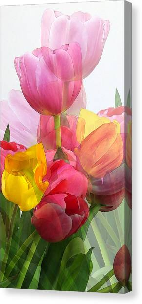 Vertical Tulips 2 Canvas Print by Rene Sheret
