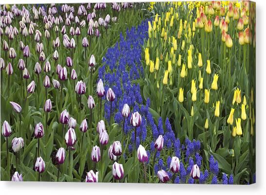 Tulip Design Canvas Print