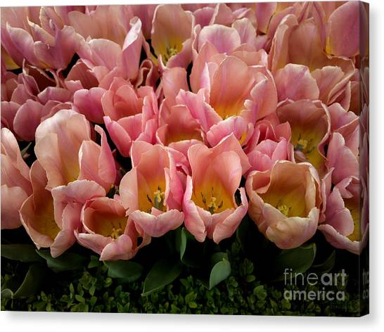 Tulip Festival - 5 Canvas Print