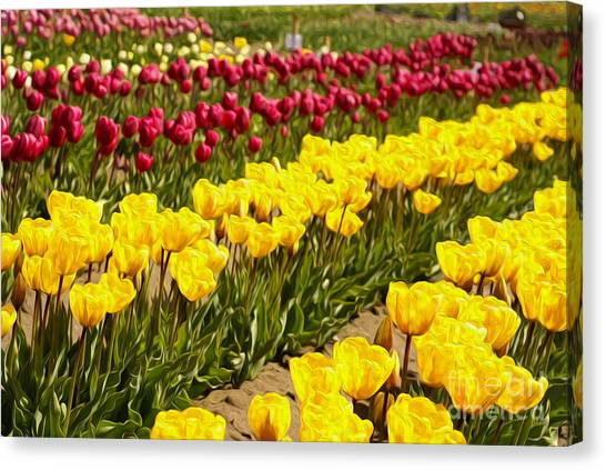 Tulip Field Canvas Print by Nur Roy