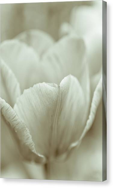 Cottage Style Canvas Print - Tulip by Frank Tschakert