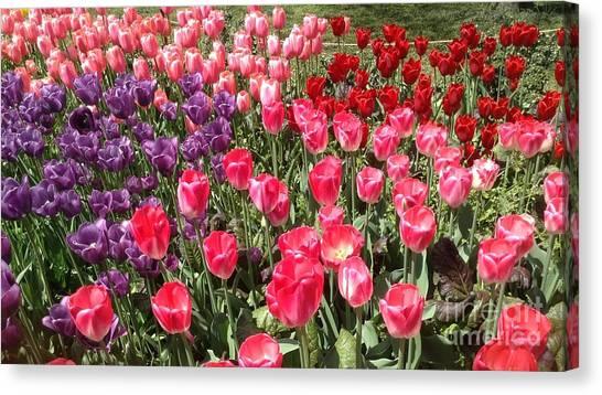 Tulip Garden 2 Canvas Print