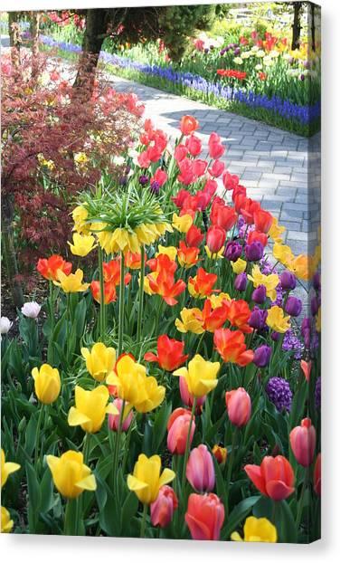 Tulip Path Canvas Print