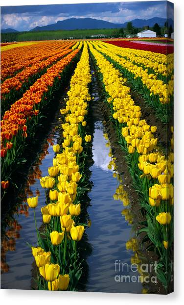 Mountain Ranges Canvas Print - Tulip Reflections by Inge Johnsson