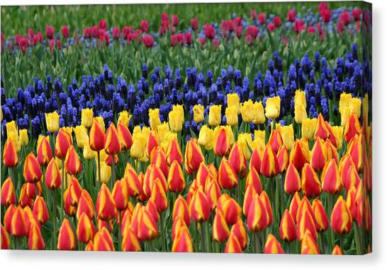 Tulip Time In Amsterdam Canvas Print
