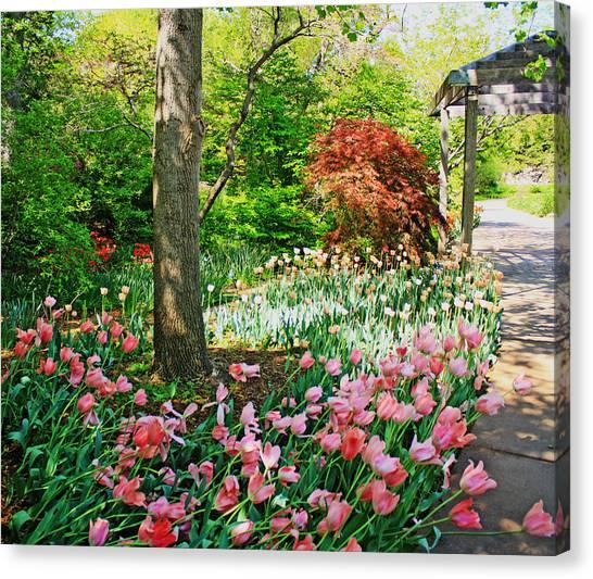 Tulip Trail Canvas Print