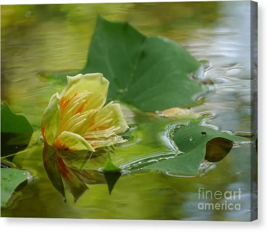 Tulip Tree Flower Canvas Print
