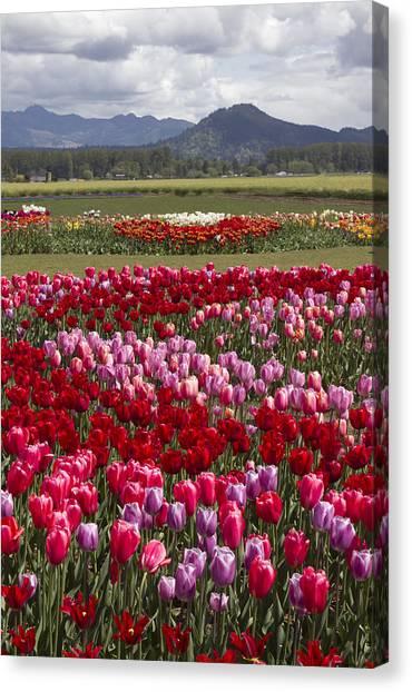 Tulip Vista Canvas Print