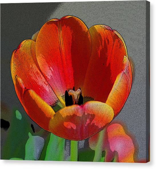 Tulip2 Canvas Print by Valerie Timmons