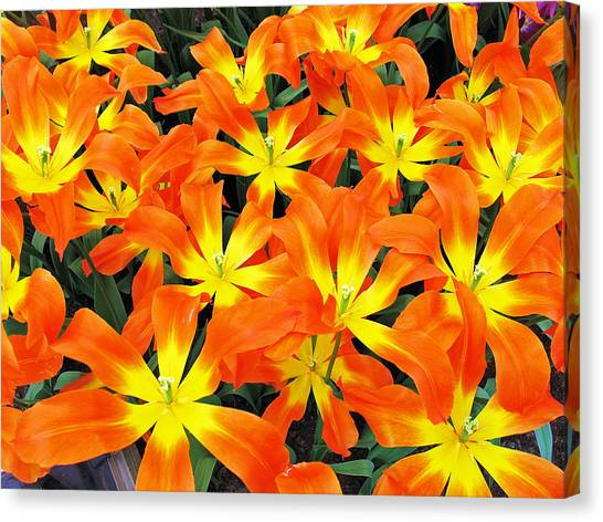 Tulips 1 Canvas Print