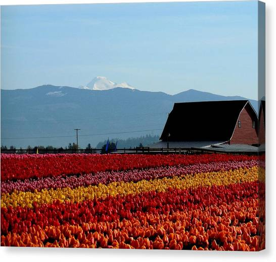 Tulips And Barn 2 Canvas Print
