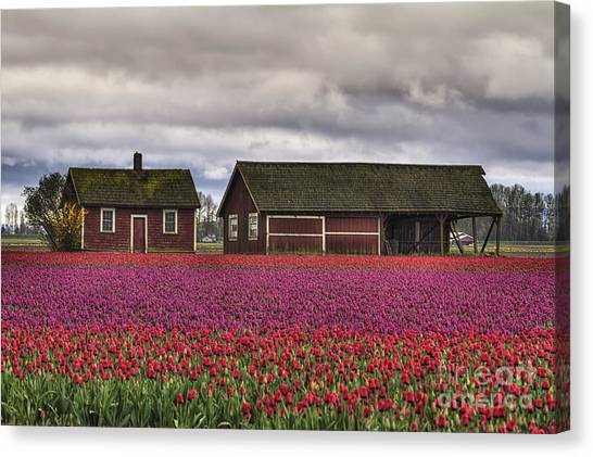 Kung Fu Canvas Print - Tulips And Barns by Mark Kiver