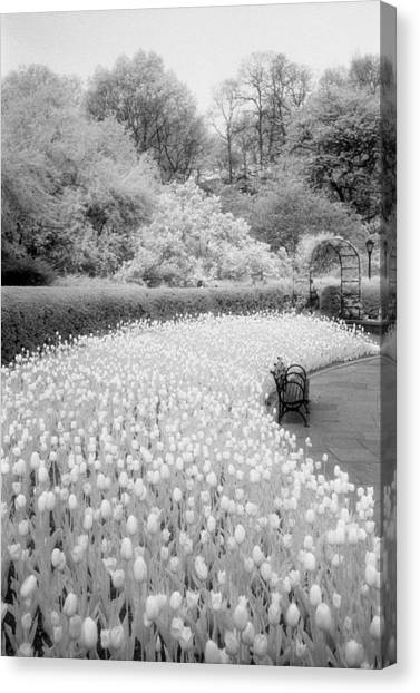 Tulips And Bench II Canvas Print