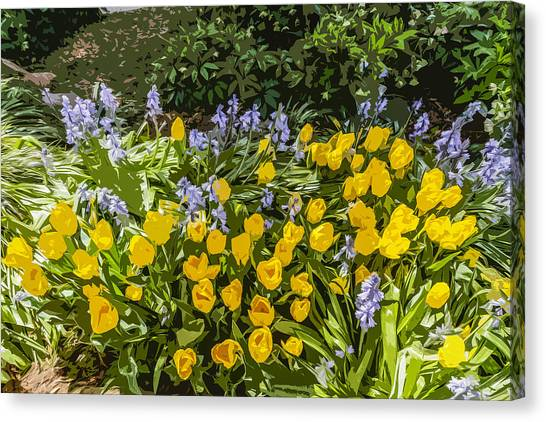 Tulips And Bluebells Canvas Print by Gary Cowling