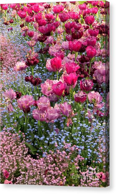 Tulips And Forget-me-nots Canvas Print by Frank Townsley