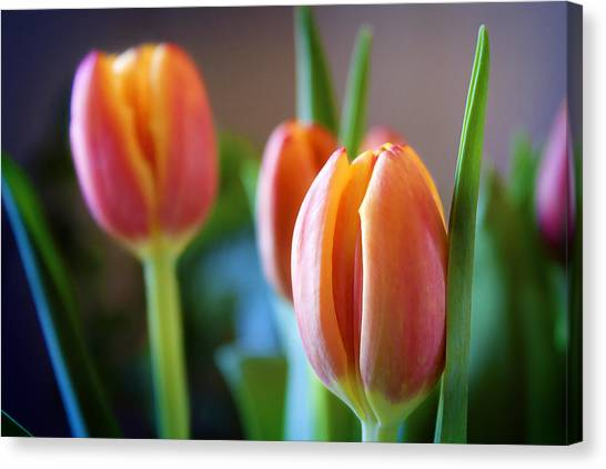 Tulips Artistry Canvas Print