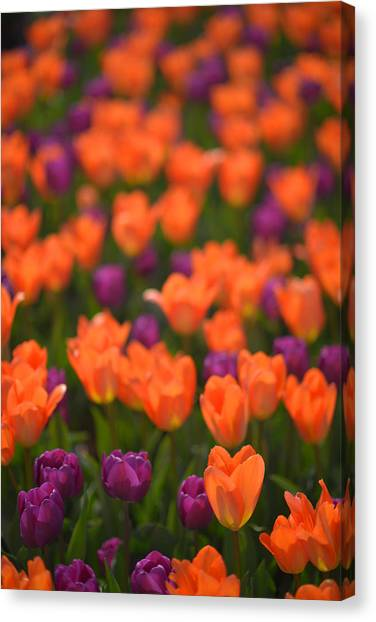 Tulips At Clevelands Botanical Gardens Canvas Print