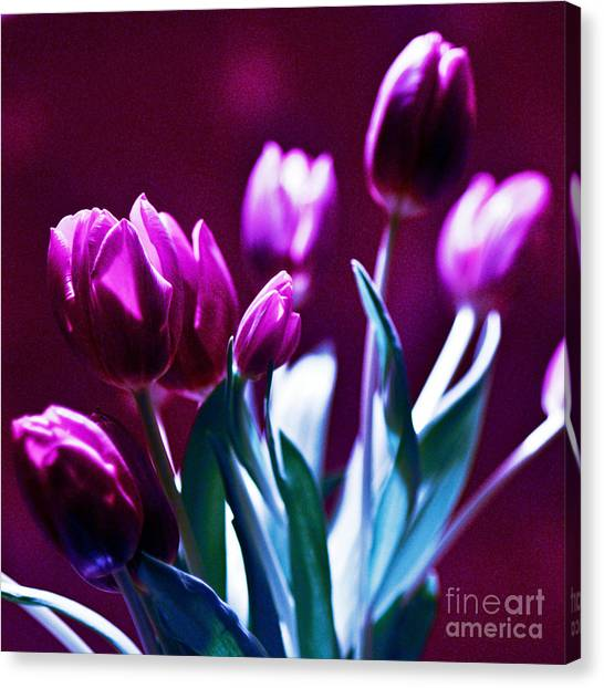 Tulips In Purple Canvas Print