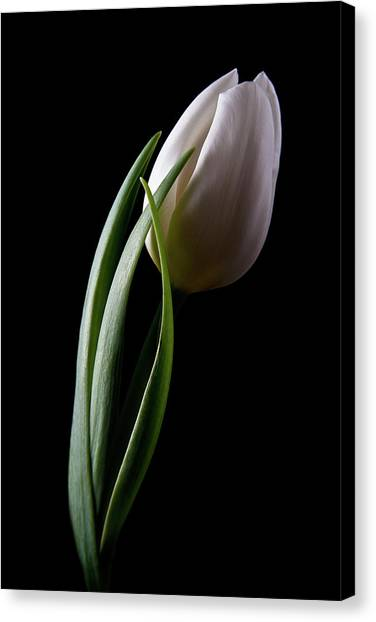 Tulips Canvas Print - Tulips IIi by Tom Mc Nemar