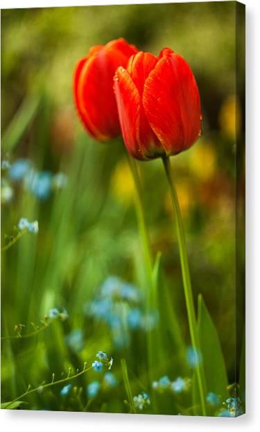 Tulips In Garden Canvas Print