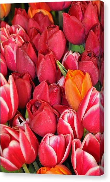 Tulips In Pike Place Market Canvas Print