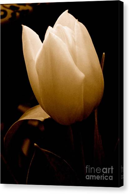 Tulips In Study 1 Canvas Print