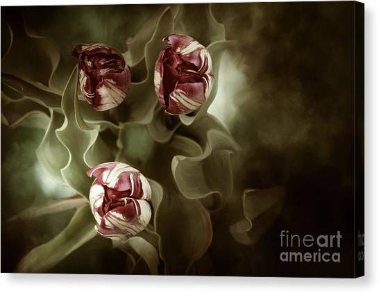Tulips In The Mist  Canvas Print