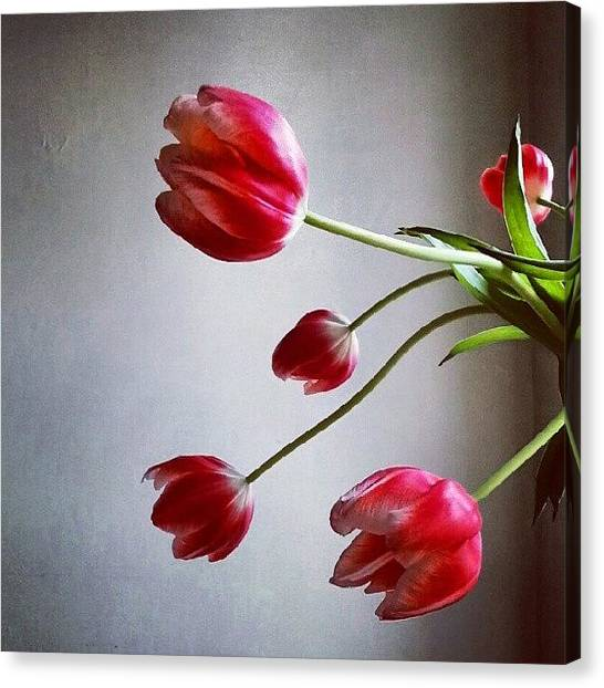 Red Canvas Print - Tulips by Jill Tuinier