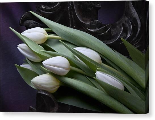 Twig Canvas Print - Tulips Laying In Wait by Tom Mc Nemar