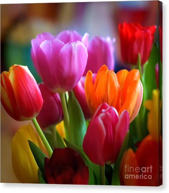 Tulips Light Canvas Print