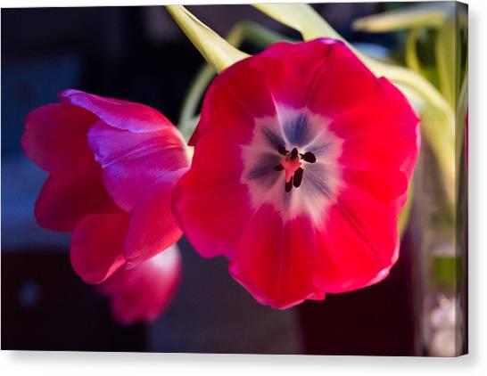 Tulips Mixed Light Canvas Print by Paul Indigo