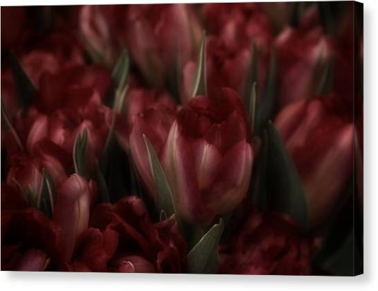 Tulips Romantic Canvas Print