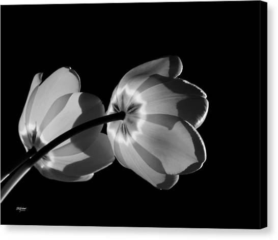 Tulips Tipping To The Sun Canvas Print