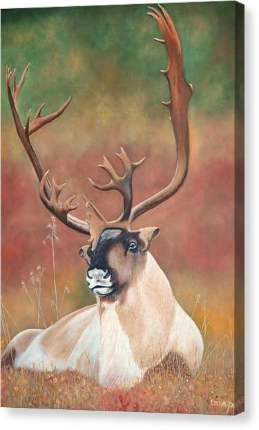 Tundra Caribou Canvas Print